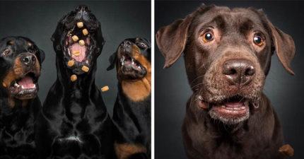 25張狗狗「用生命來接食物」爆笑傻萌照 看到「崩壞二哈」只想大喊:不要這樣玩月月啦XD