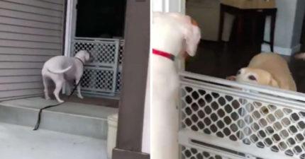 狗狗搬到新環境「孤單到悶悶不樂」 主人給牠最大驚喜...汪星人「從沒想過會發生」嗨翻:謝謝你QQ