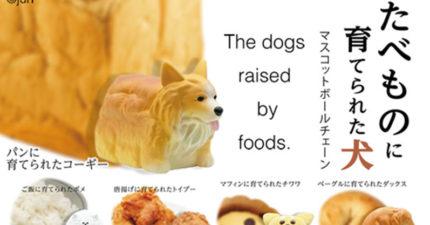 日扭蛋推「被食物養大的狗狗」萌翻少女心 每吃一條土司就有「一隻科基」無辜遭殃~