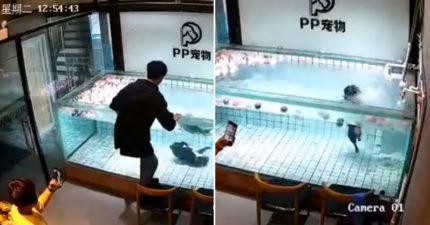 法鬥被丟到「水池硬學游泳」無助狂踢 蠢飼主「先拍照未急救」牠無辜沉水底...