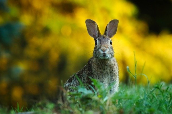 17個「衝破你想像」的自然驚奇事實 麥田圈的創作本尊...竟是國寶級動物!
