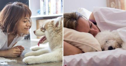 老公、男友要睡地板了!新研究發現:「跟狗狗一起睡」品質比較好