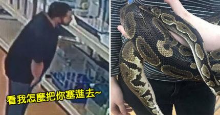 寵物店「1.3公尺巨蟒不見」調監視器傻眼 傻哥把「內褲當百寶袋」網笑翻:不知道蛇愛吃蛋?