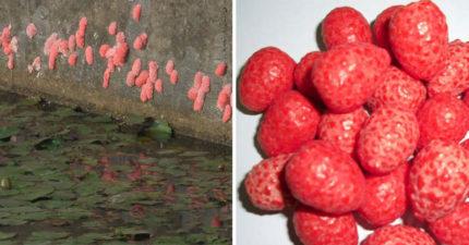 媽媽自爆吃過「水溝邊的草莓糖」 網友崩潰:到底是什麼味道?