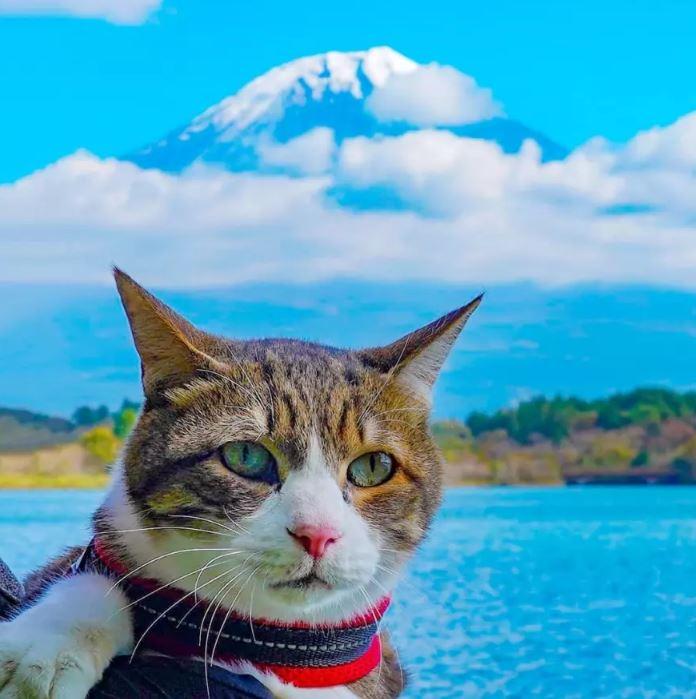 他把兩貓「裝進嬰兒車」旅行各地!喵星人「看著楓葉落下」美照網讚爆:萌哭了❤