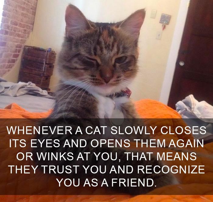 13個「主子不想讓人類知道」心機喵知識 把小昆蟲拿給你...只因為你是廢貓!