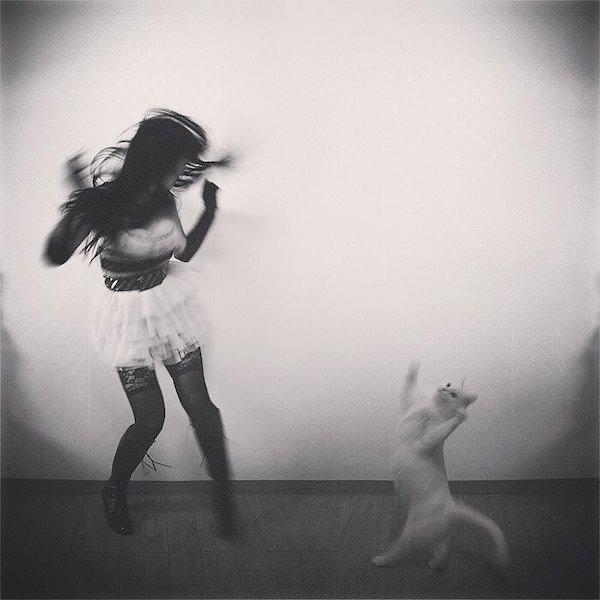 25張貓咪用來征服人類的「超萌貓之舞」 牠跳出「詭異儀式」成功召喚恐怖黑影!