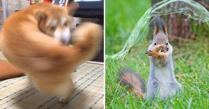「右勾拳柴犬」大爆紅引出超能力系超萌動物 松鼠「物理、魔法」都俱備強到犯規!