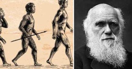 學者發表可以「推翻達爾文《進化論》」的關鍵:現今90%生物都是一起出現的!