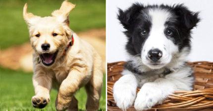 「伴侶跟狗狗之間」你選哪一個? 「54%飼主的決定」讓網震驚:甚至直接結束