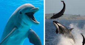 鯊魚都「不吃海豚」?比人類更聰明的「智慧絕招」讓鯊魚不敢動牠:打不過欸~