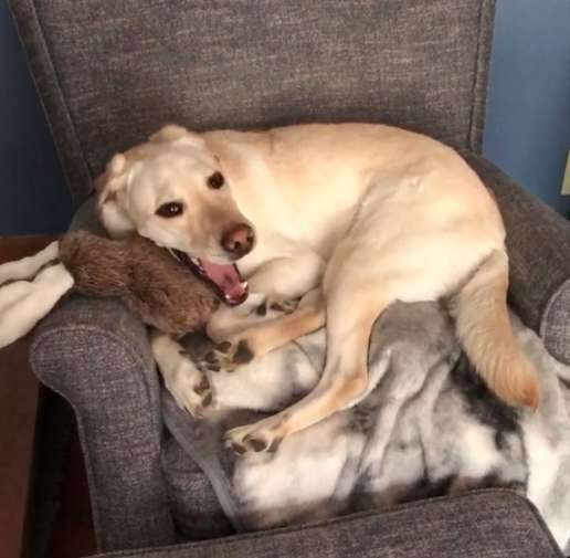 主人帶服務犬去玩具店「挑自己的禮物」 牠「皺眉猶豫→下定決心」過程超可愛!