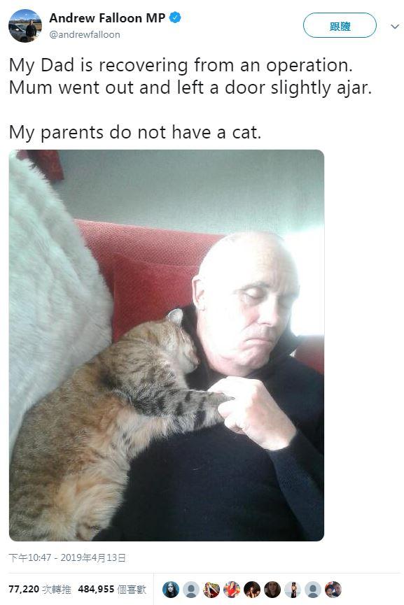 老爸從醫院回來「懷裡多一隻貓」 超萌「術後服務」讓48萬網友讚爆!