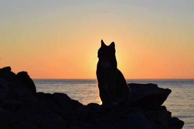 希臘小島徵貓奴「跟55隻貓咪同居」 超幸福「額外津貼」網友興奮:誰都不准跟我搶!