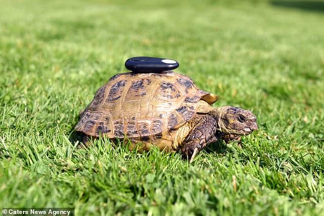 最勵志飆速寵物龜!「60時速」逃跑過百次仍不放棄 走失半年後主人氣到裝「秘密絕招」
