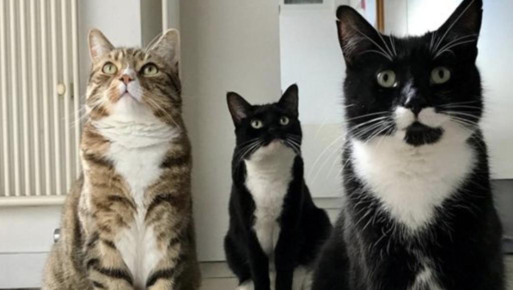 研究發現「貓皇其實知道自己的名字」只是不想理你 耳朵「不自然抖動」就是證據!