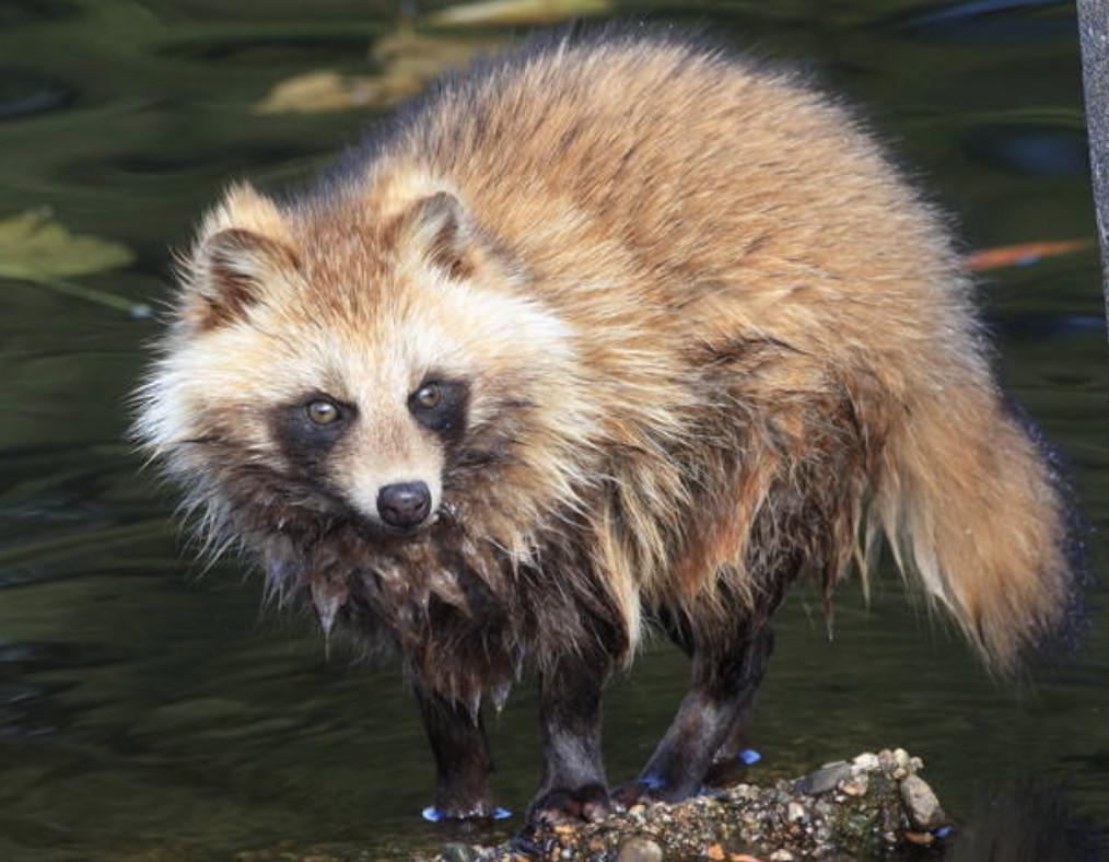 9個「動物跟人類報恩」的真實暖心故事 他好心救了狸貓...隔天門口多7個核桃!