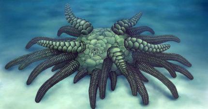 發現4.3億年前詭異新物種!科學家證實是「超好吃海鮮的祖先」網驚:以後不敢吃了