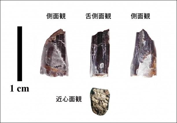 高中生校外教學挖到「9000萬年前化石」 教授驚:是未知的暴龍品種!