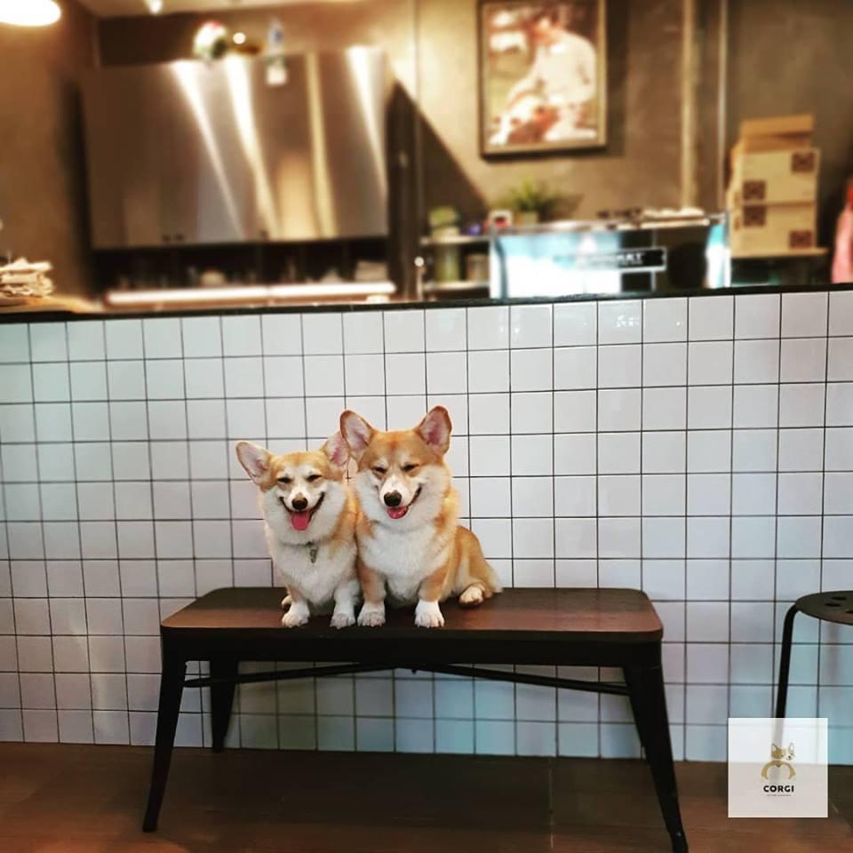 泰國「短腿店員咖啡廳」萌出新角度!「一團團餵食畫面」讓基粉少女心噴發:被療癒惹(*´∀`)~♥