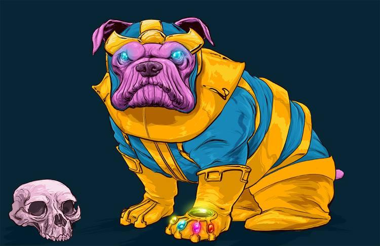 13個連薩諾斯也被萌倒的「狗狗版復仇者聯盟」 「雷神索爾」長髮真的既視感太強!
