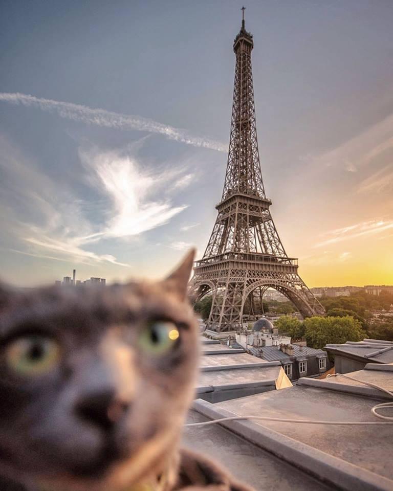 11張「被大嬸附身」的貓咪出遊自拍照 臉一定要「佔畫面40%」是黃金法則!