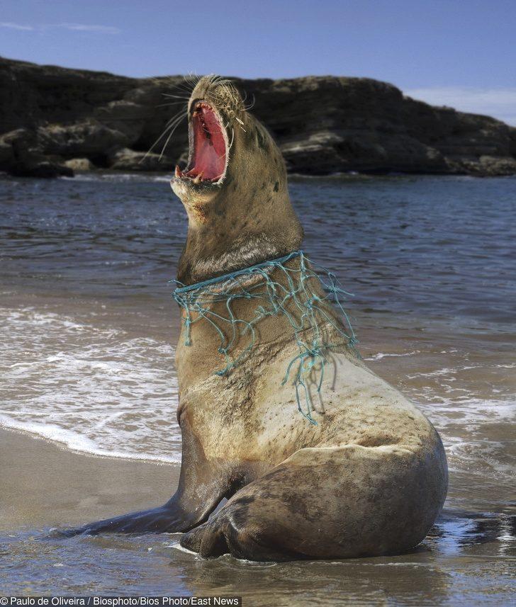 21張證明地球「已經快來不及救了」的真實照片 熊把垃圾袋當成獵物...