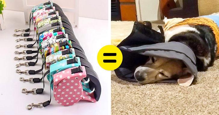 10件獸醫們希望「所有主人都知道的事情」 很多狗狗因為「寵物牽繩」才被送來看醫生!