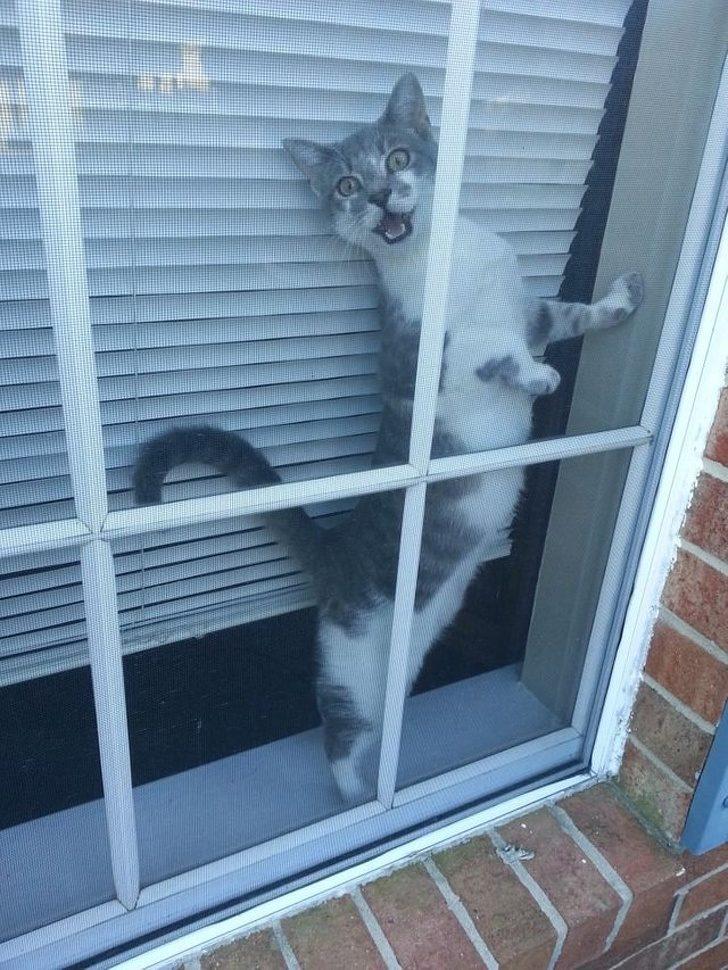 23隻用生命表現「我等著你回來」的超癡心毛孩 敢讓我貓皇等門「等你回來就知道」!