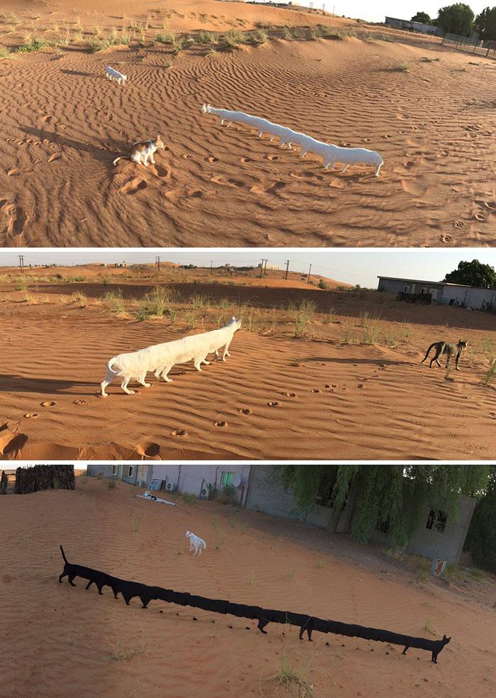 20隻「被主人瞬間拉長又縮短」的超爆笑全景動物照 貓皇直接橫跨半個沙漠!