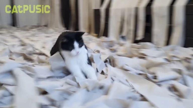 主人用100捲衛生紙打造「貓皇終極夢幻天堂」 一踏入聖地牠直接「傻眼貓咪」萌翻網友!