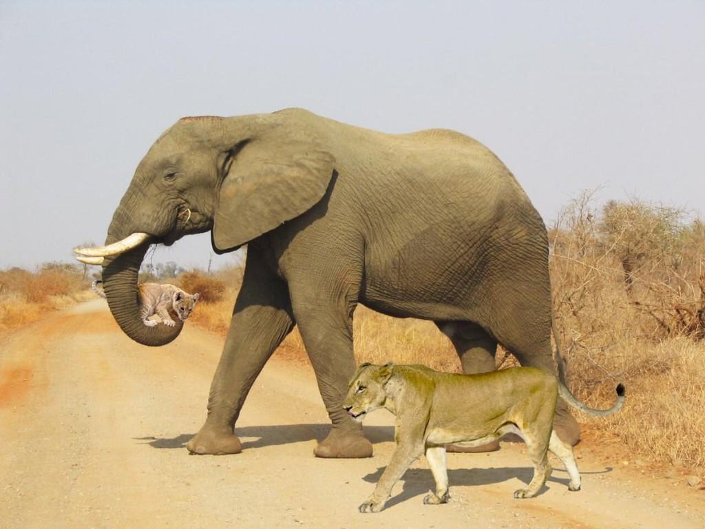 8張「神人用PS騙倒全世界」的知名假照片 長頸鹿有「柯基腿」是假的!