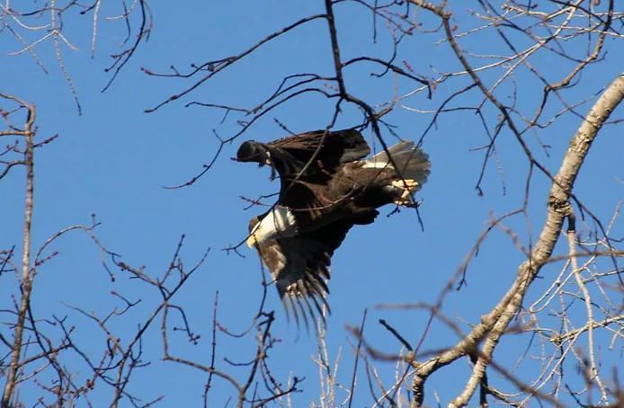 禿鷹從掩埋場「撿垃圾丟到居民院子」引爭議 專家冷笑:都是人類自找的!