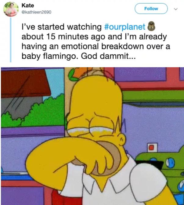 影/紅鶴寶寶「雙腳卡鹽田」被同伴獨自留下…觀眾爆淚:對不起,是我們的錯!