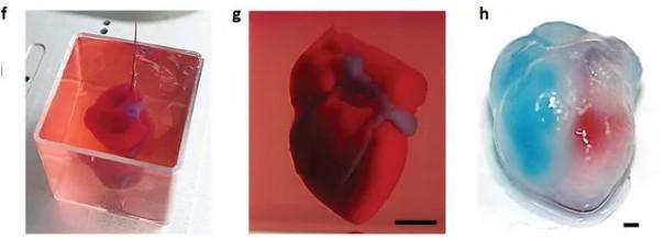 科學家首次「用脂肪成功印出」完整「人類心臟」 網震驚:複製人的未來不遠了...