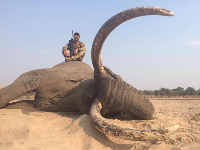 獵人拿走「5000頭大象靈魂」堅稱沒做錯 嘴硬嗆動保團體「裝懂」:我是為牠們好!