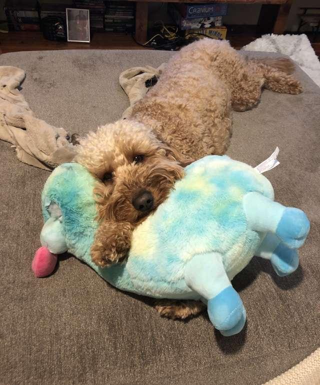 愛犬每天睡前「堅持要挑床伴」 主人無奈「牠連洗澡都不放過」…連麋鹿都被翻牌!