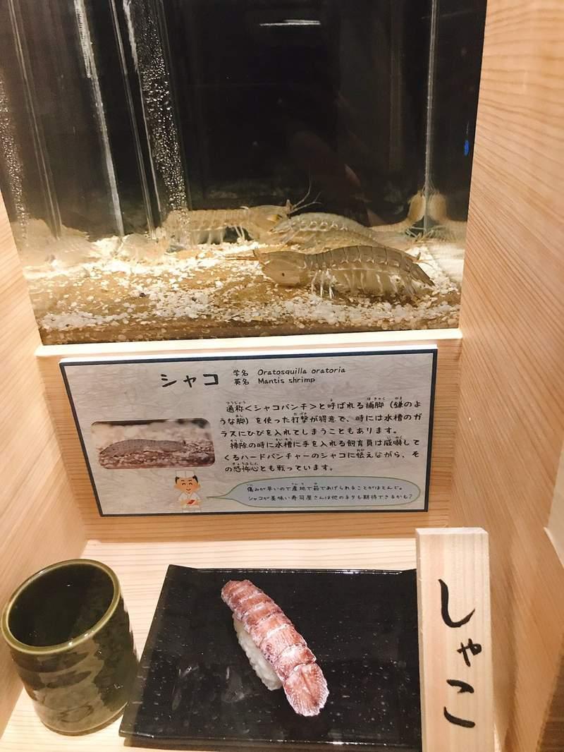 日本獵奇水族館「魚+被做成壽司模樣」一起放!長腳蟹版本「份量太寫實」網:想吐了