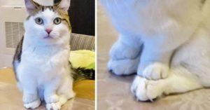 20張照片證明「貓咪果然來自外星球」 在貓草盒待了一天的表情「仿佛世界末日」!