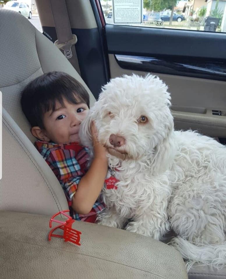愛犬常無故「趴地打滾」痛哭...主人裝監視器卻揭發「暖男郵差」的超惡劣舉動!