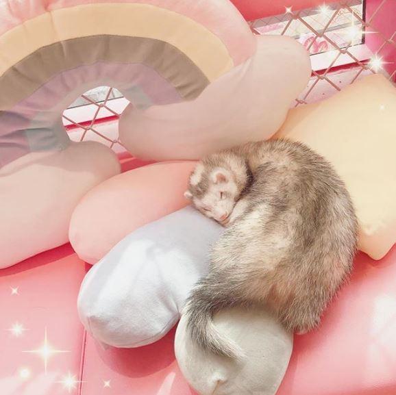 水豚陪你吃飯!8間去日本玩必訪的「動物主題餐廳」 只要「抓對時間」還能親密餵食❤