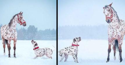 10張「沒血緣關係卻意外撞臉」動物合照 「哈士奇和哈士貓」讓人傻傻分不清!