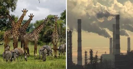 聯合國警告「75%地球已被污染」 百萬物種「走向滅絕」網崩潰:人類比薩諾斯還可怕!