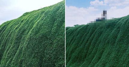 台中「綠色瀑布」成為網美打卡聖地 老翁種5年「剛發現就關閉」民眾苦嘆:被糟蹋心血!
