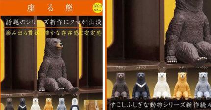 日本在推新扭蛋「坐著的熊熊」萌翻全場 超整齊「坐一排發呆」網友超崩潰:錢拿走!