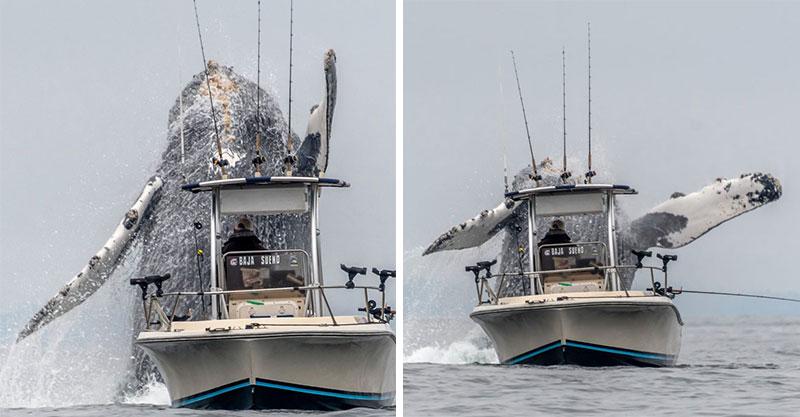 幸運漁民遇「比船大的海底猛獸」被攝影師拍到奇蹟照!