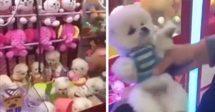 影/中國出現「活狗夾娃娃機」引爭議 網友看「小萌犬狂發抖」暴怒:太沒人性!