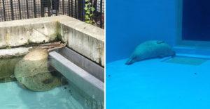 日網友分享海豹的「12種靈魂睡姿」 游到哪「睡到哪」比樹懶還懶!