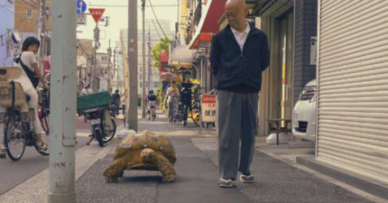 日本街頭出現「溜龜」奇景 老爺爺與「70公斤老友」散步的畫面超溫馨!