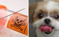自私飼主立遺囑逼「愛犬強制陪葬」 網傻眼:這是愛嗎?